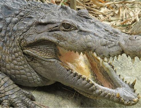 Прага для детей. Зоопарк крокодилов