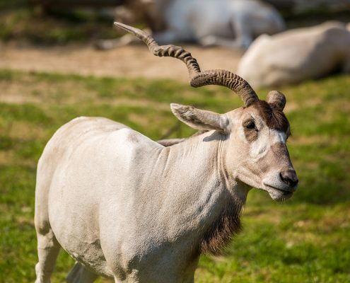 Краковский зоопарк