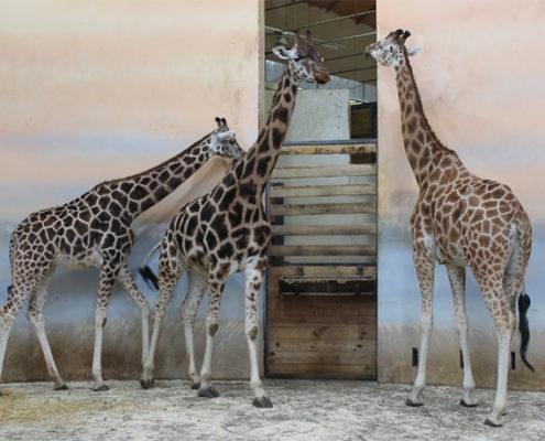 Прага для детей. Пражский зоопарк