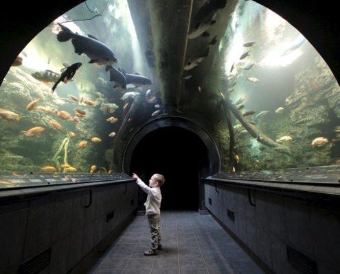 Пиво и пряники. Гигантский аквариум