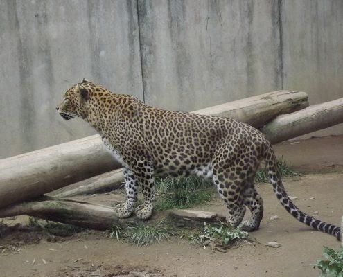 Зоопарк Jihlava